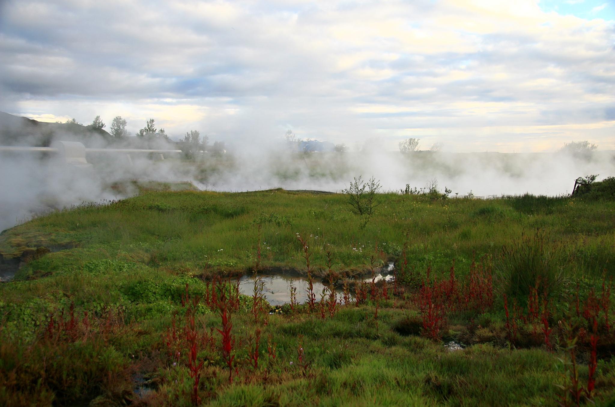 Horká voda prospívá rostlinám