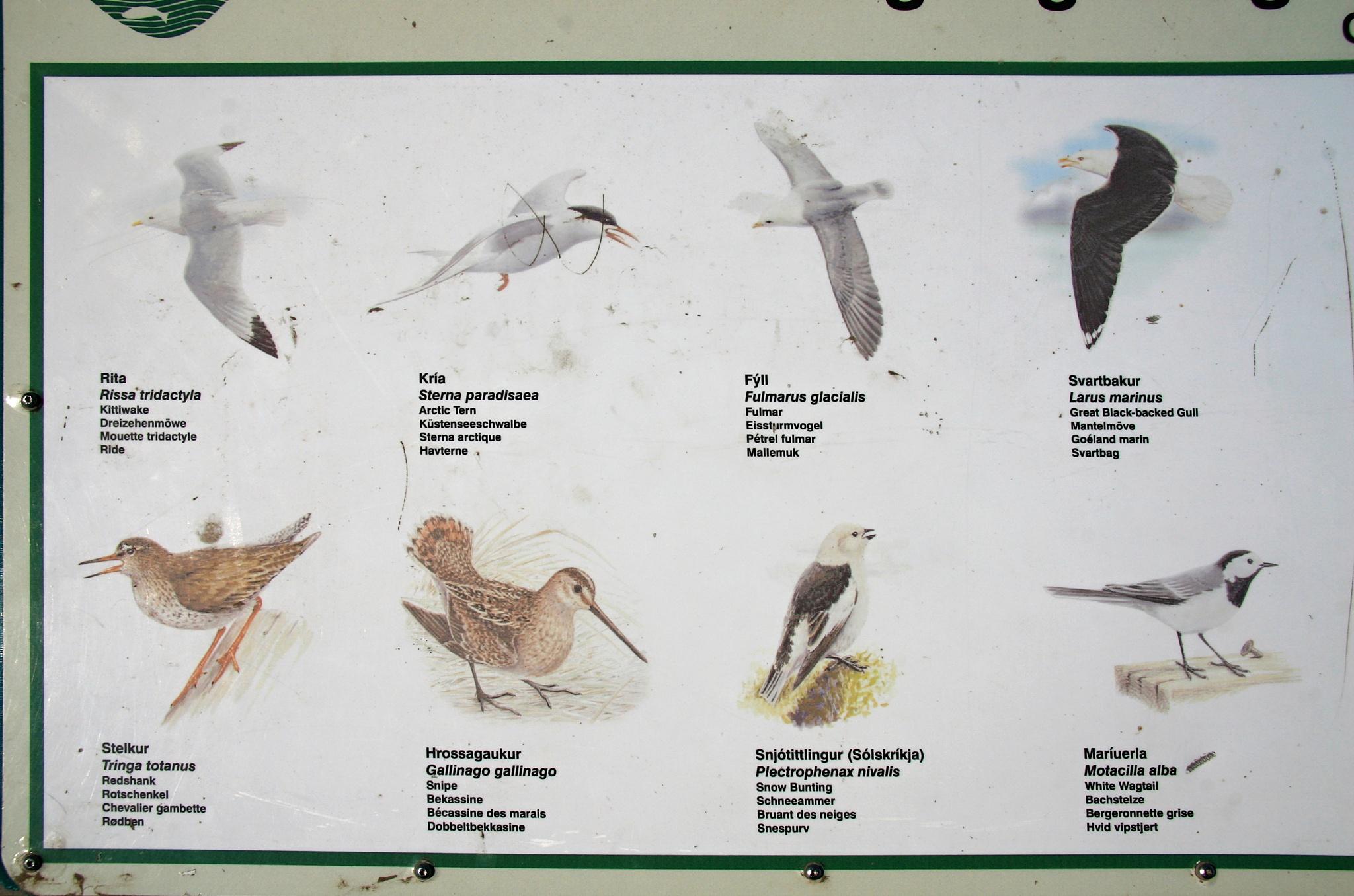Místní ptactvo.