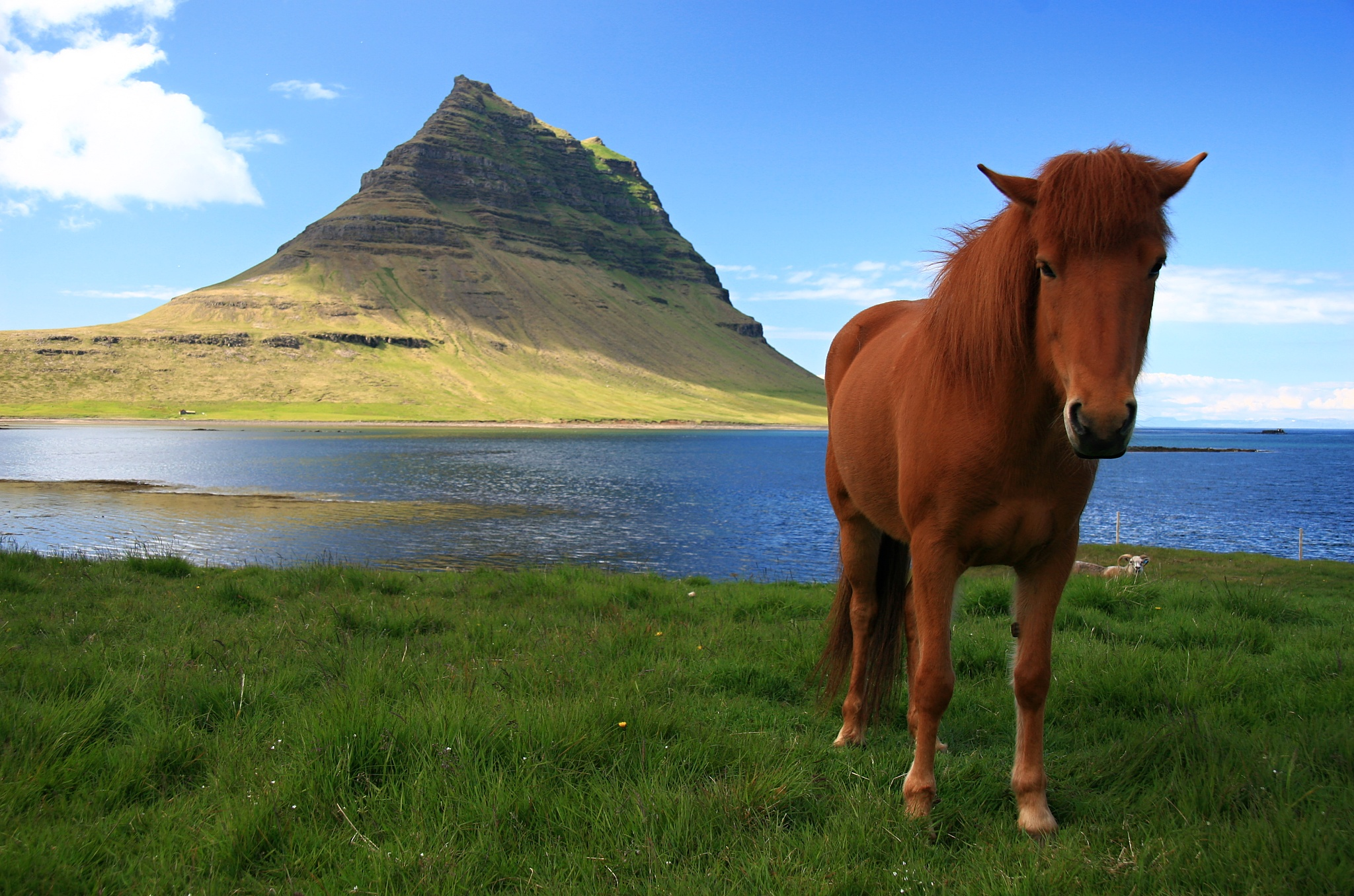 Hora Kirkjufell a islandský koník.