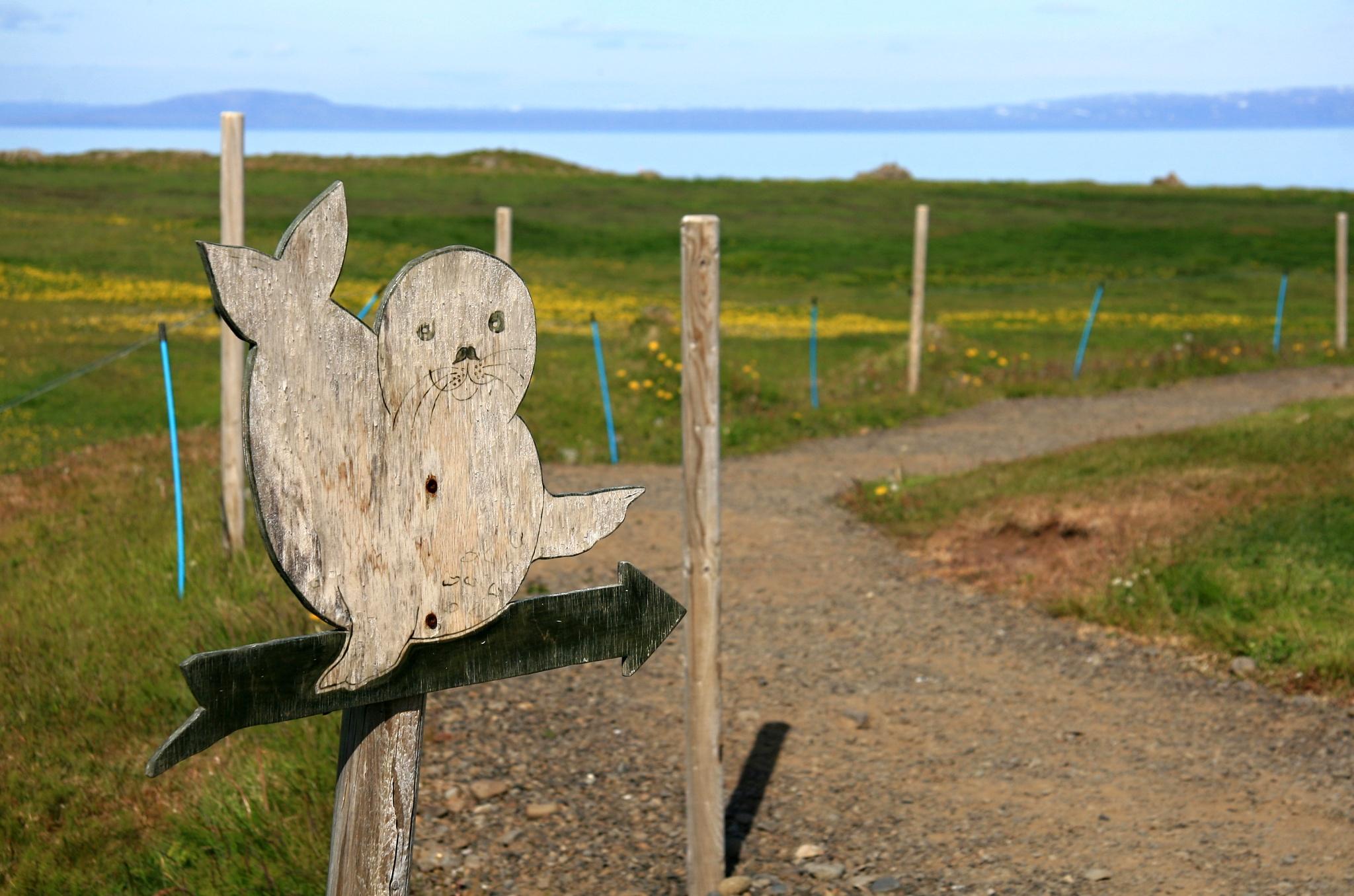 Ukazatel k pozorovatelně tuleňů blízko Hvammstangi na poloostrově Vatnsnes