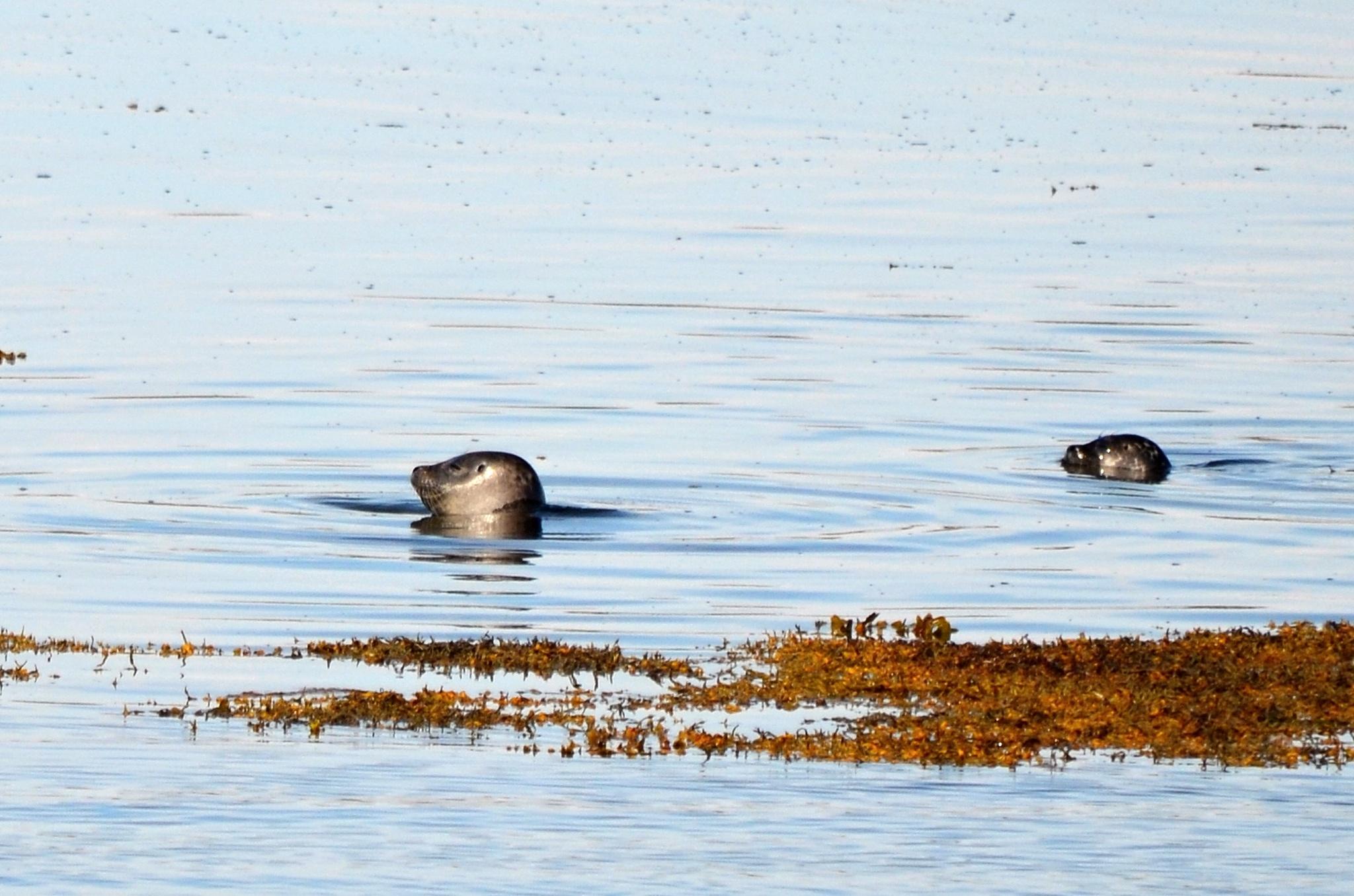 Tuleni si šli zaplavat