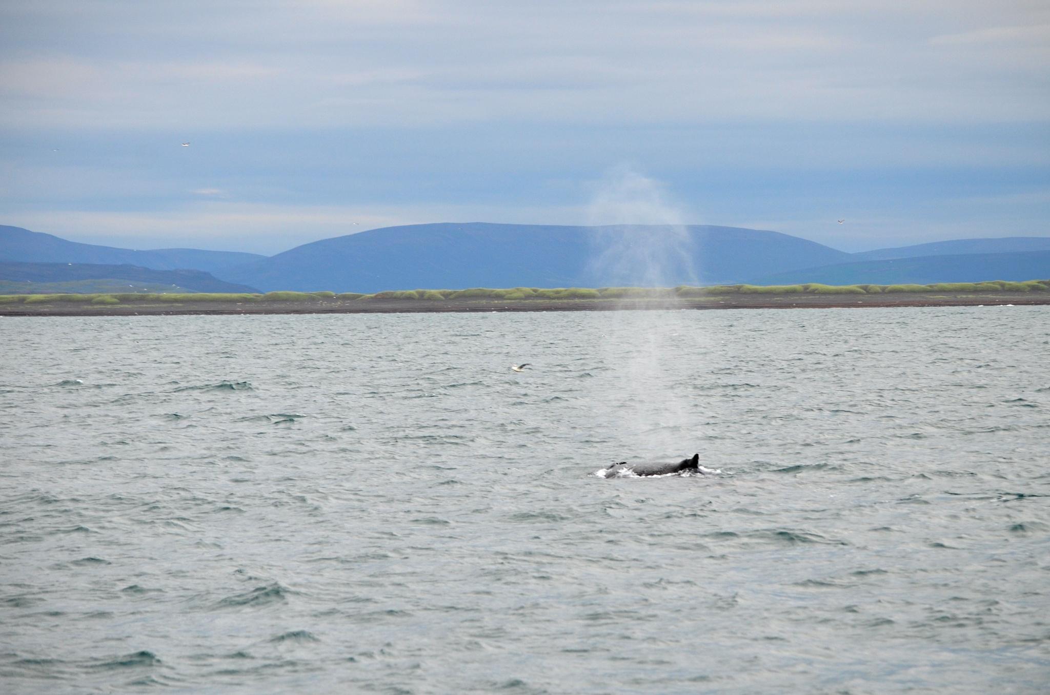 Mohutný výdech velryby