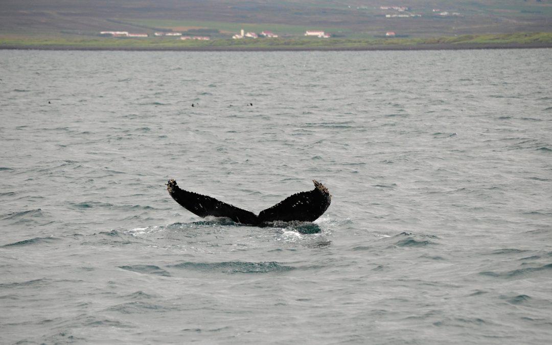 Vodopád Goðafoss, jezero Mývatn a velryby u Húsavíku