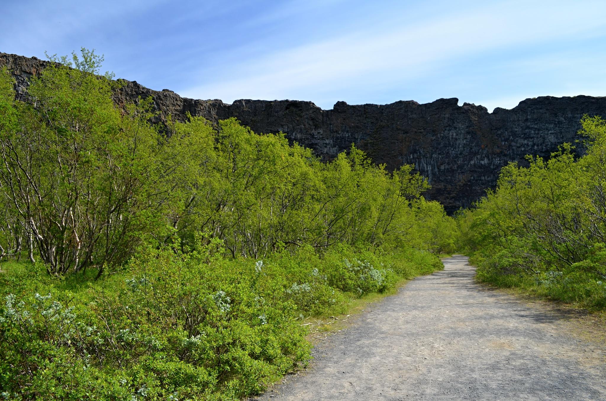 Vstup do  kaňonu Ásbyrgi
