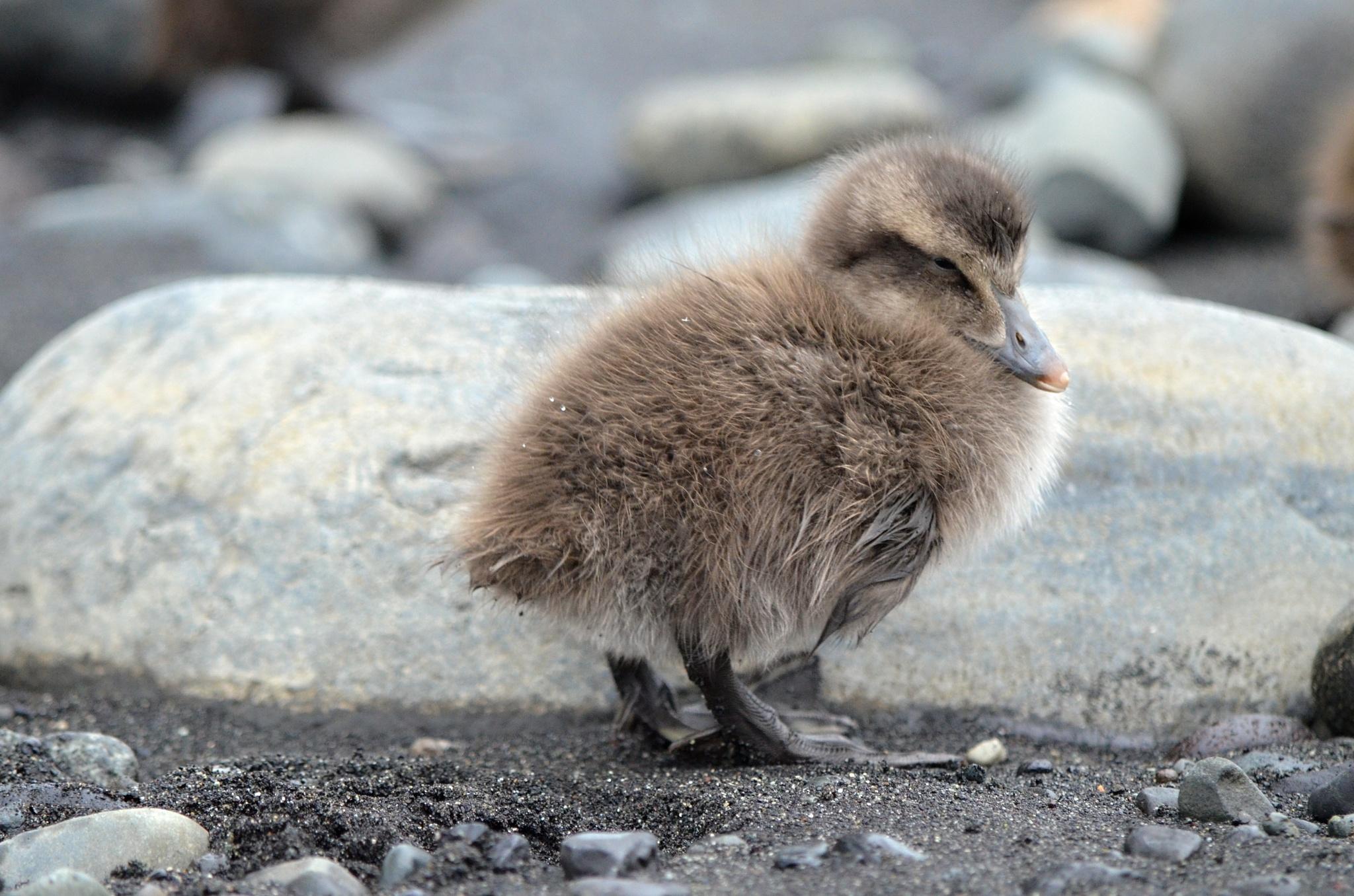 Jedno ochmýřené ptačí miminko