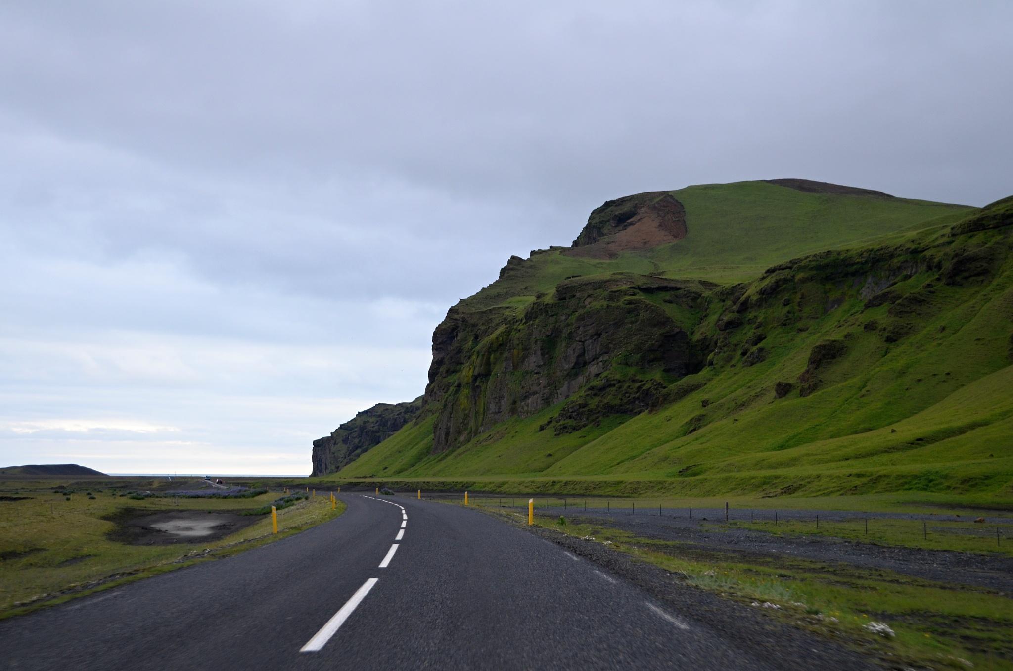 Svěží zelená islandská travička