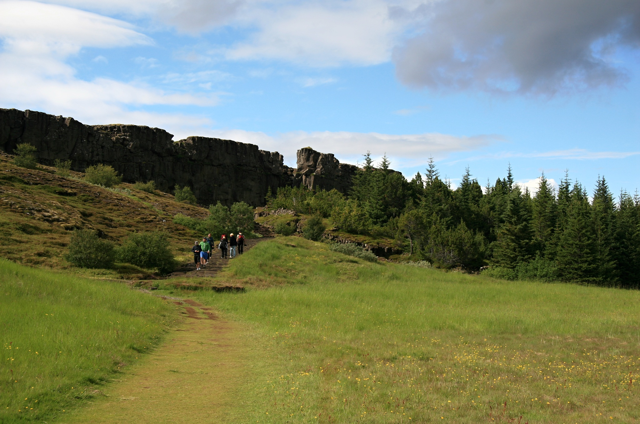 Nesmělý lesík v Þingvelliru