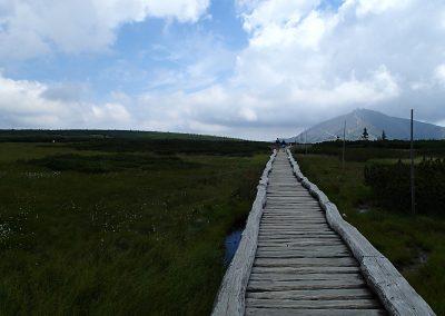 Dřevěný chodník přes rašeliniště