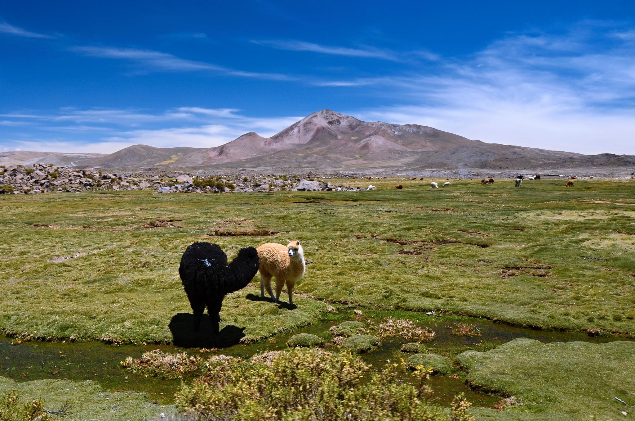 Lamy v Chile