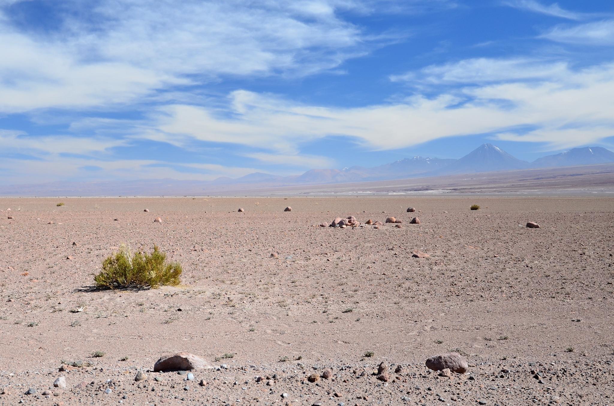 Ani nejsušší poušť není úplně bez života