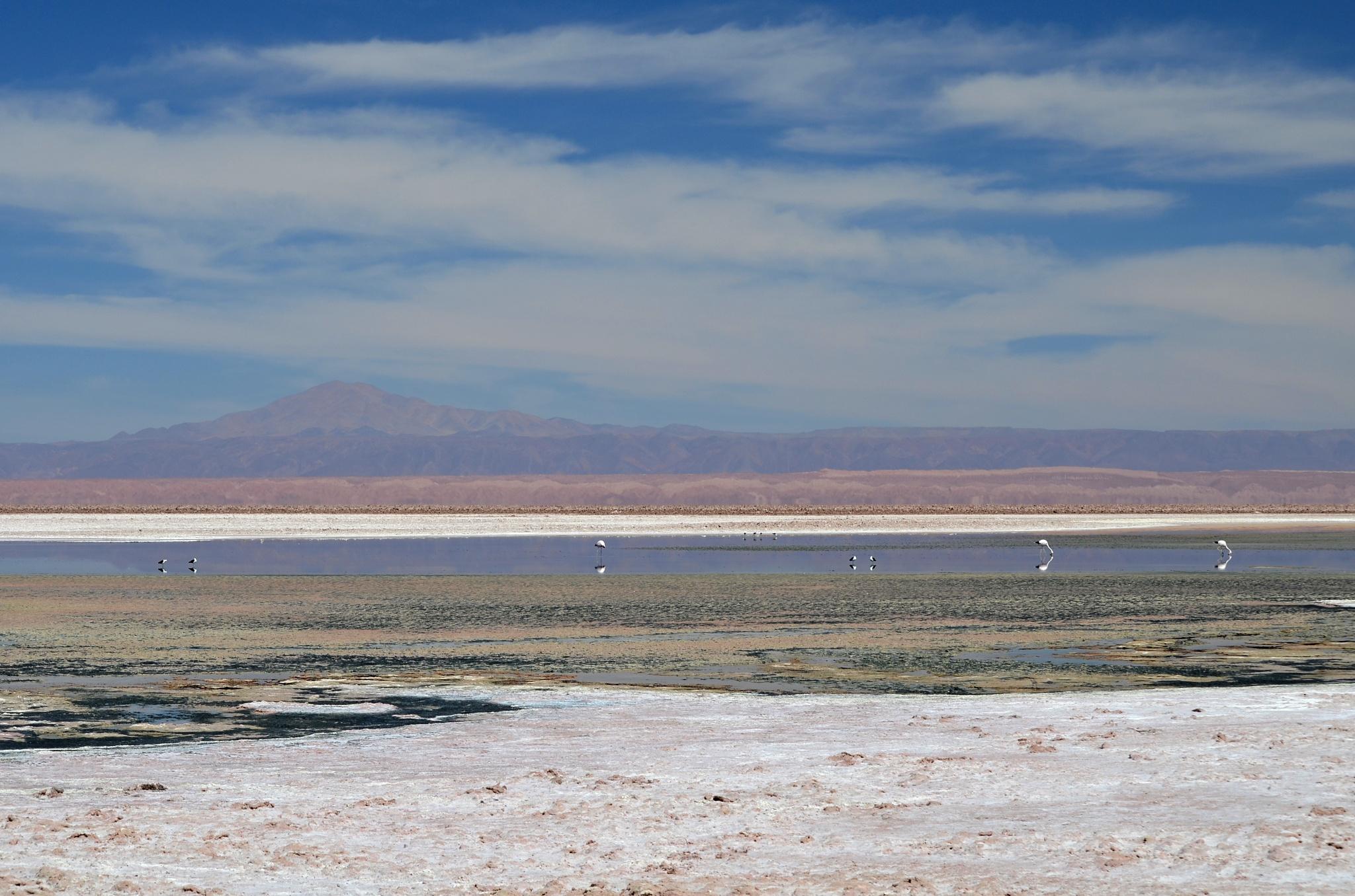 Pohled na jezero Chaxa
