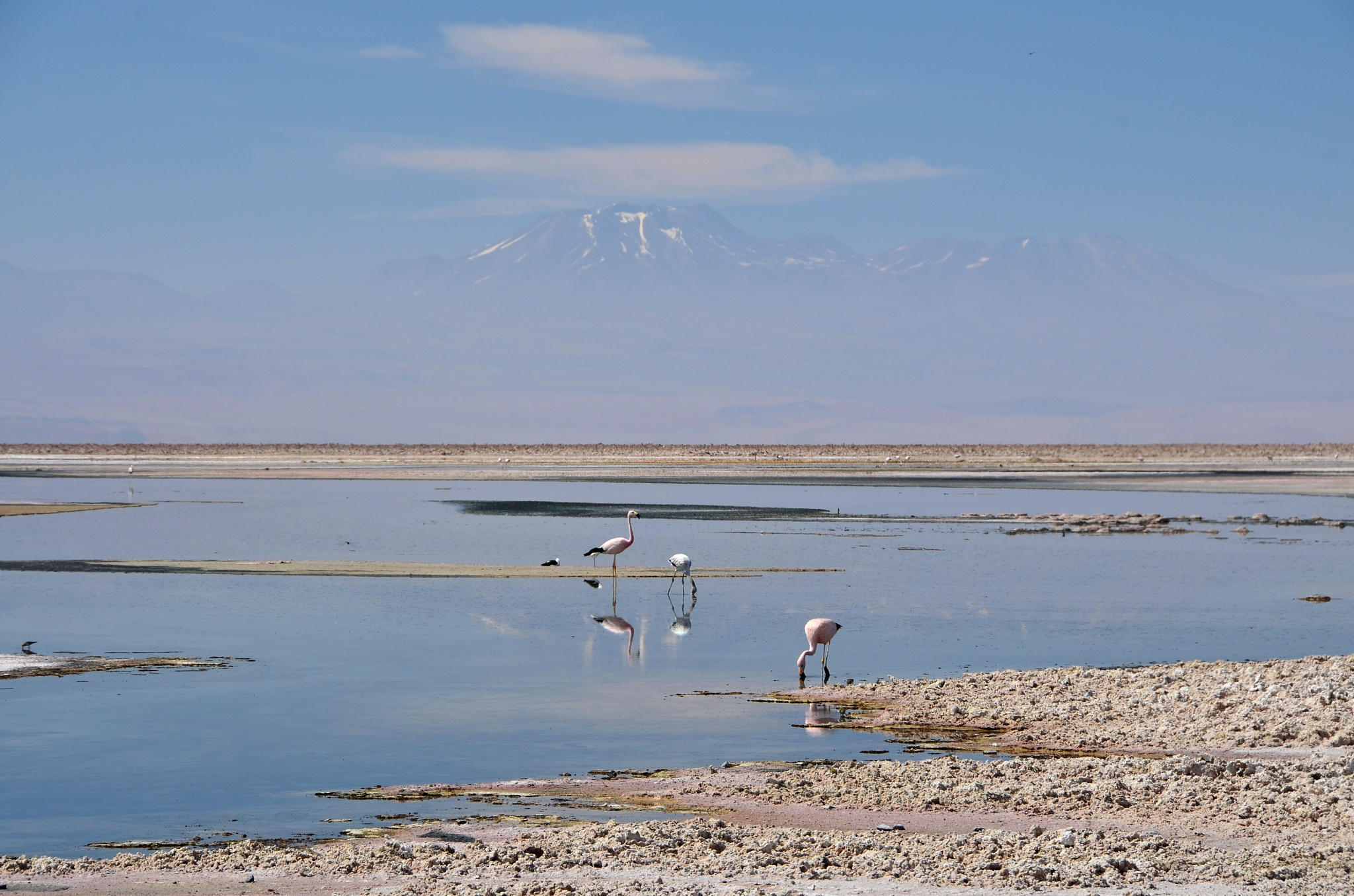 Plameňáci v jezeře Chaxa, na pozadí sopka Pular