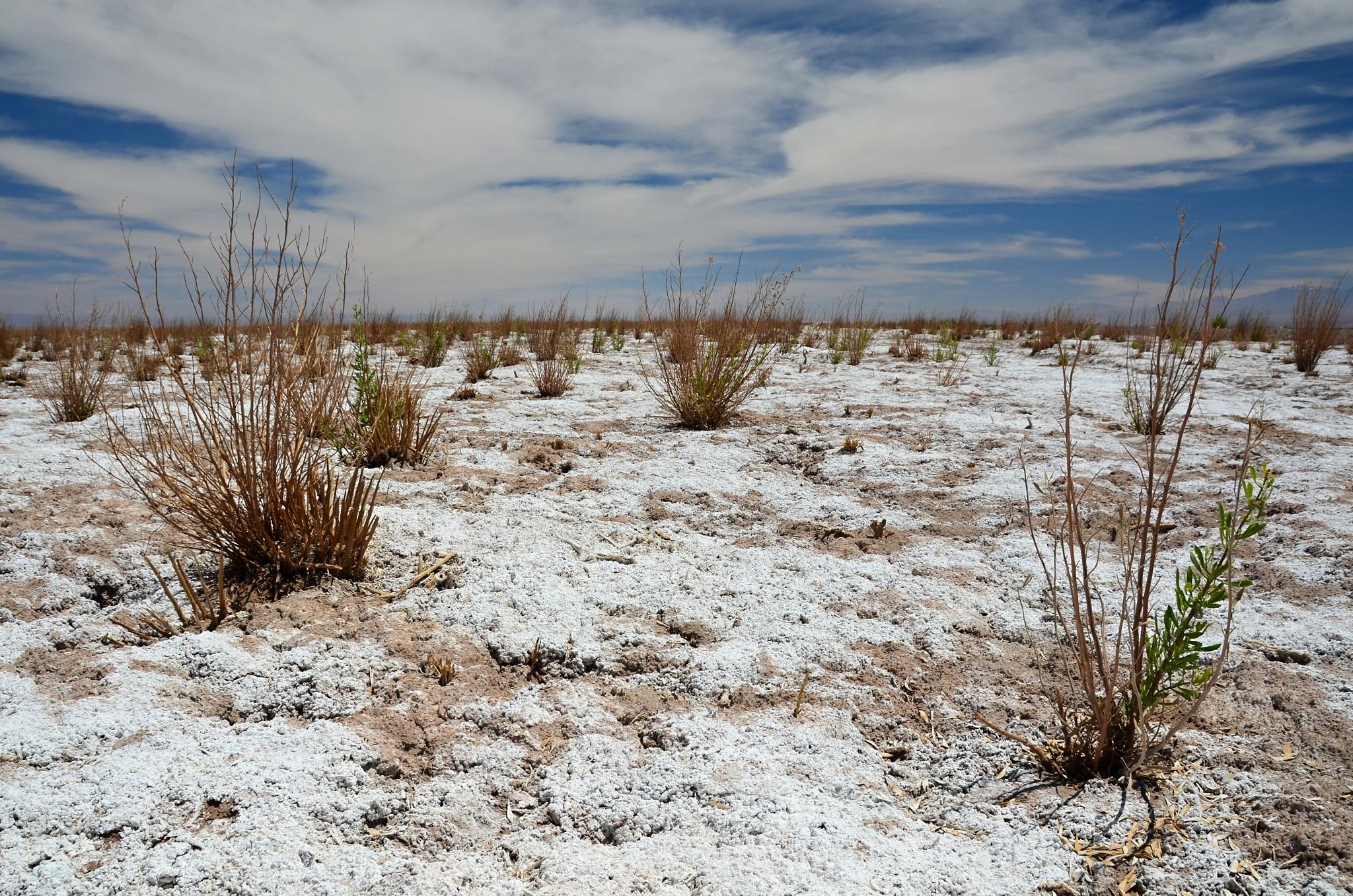Zasněžená poušť. Tedy pořádně posolená