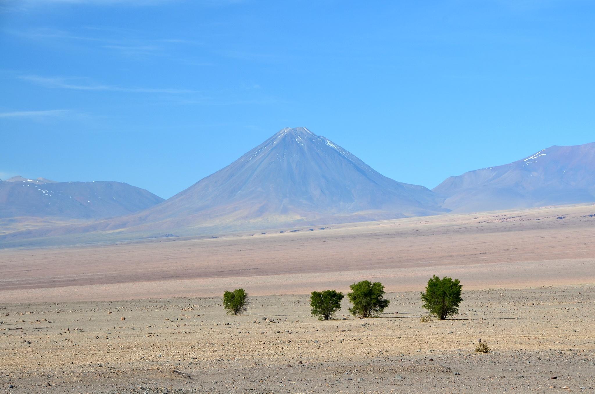 Osamocené keříky s majestátnými horami v pozadí