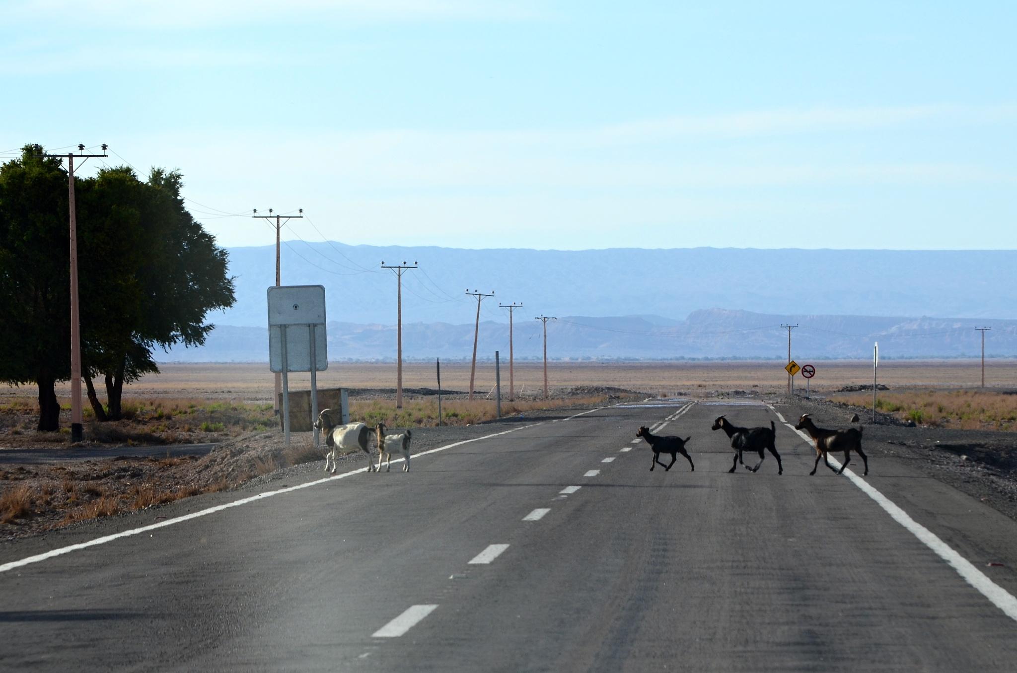Příbuzné z Chile na silnici