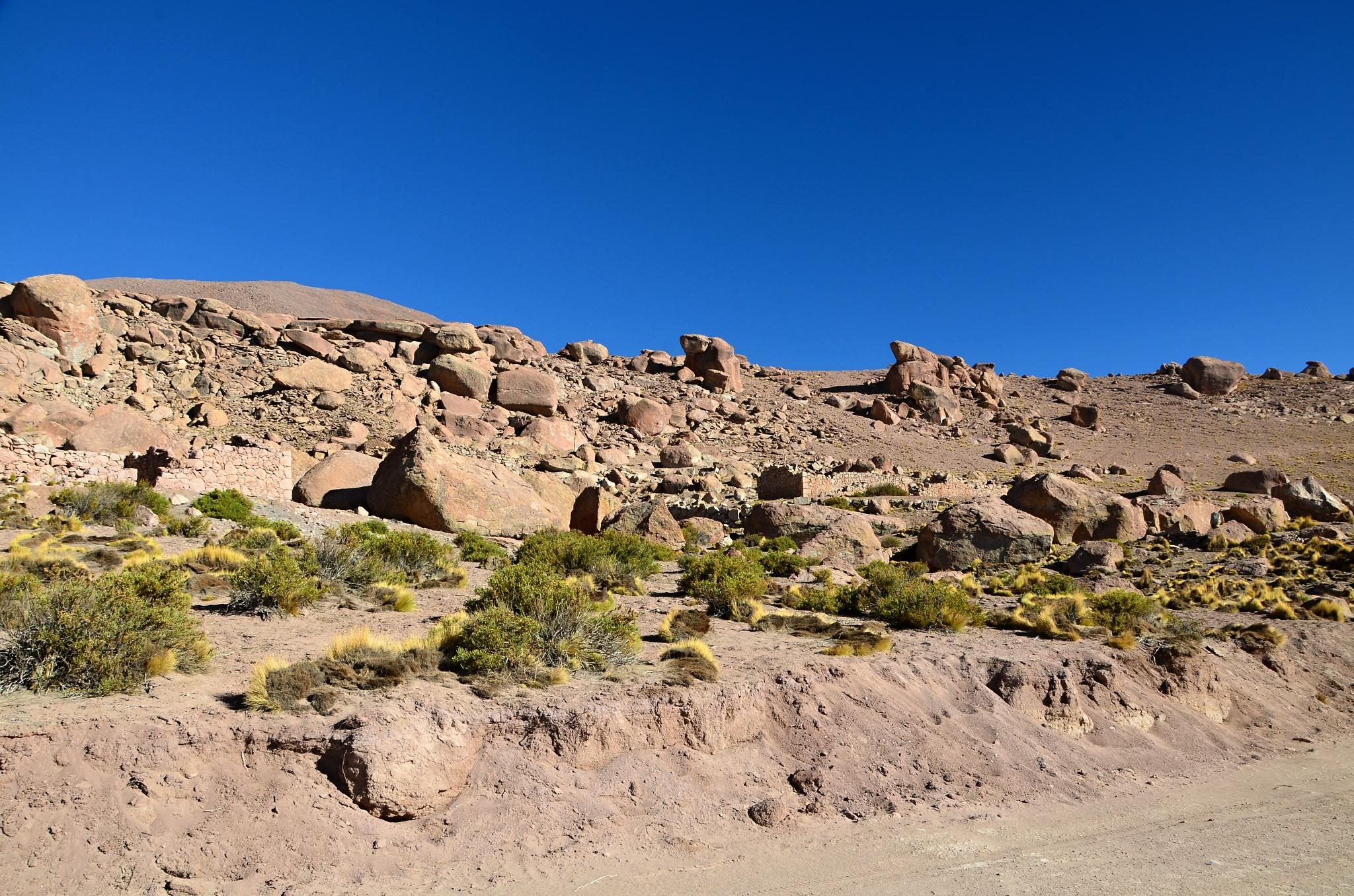 Kamenitý svah u gejzírů, kde žijí jihoamerické Viskače