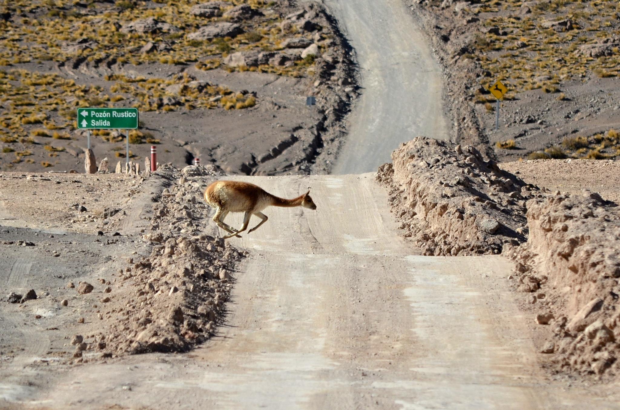 Lama na útěku