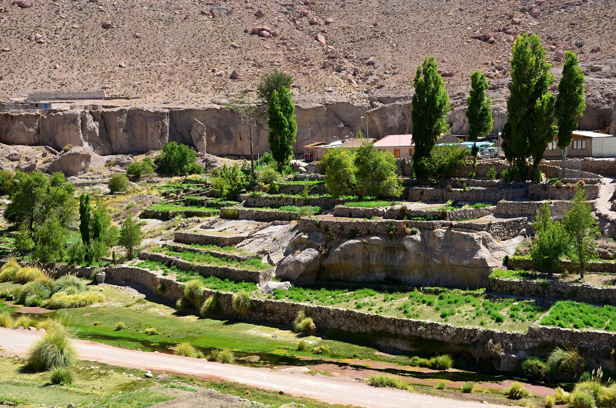 Oáza Caspana plná zeleně
