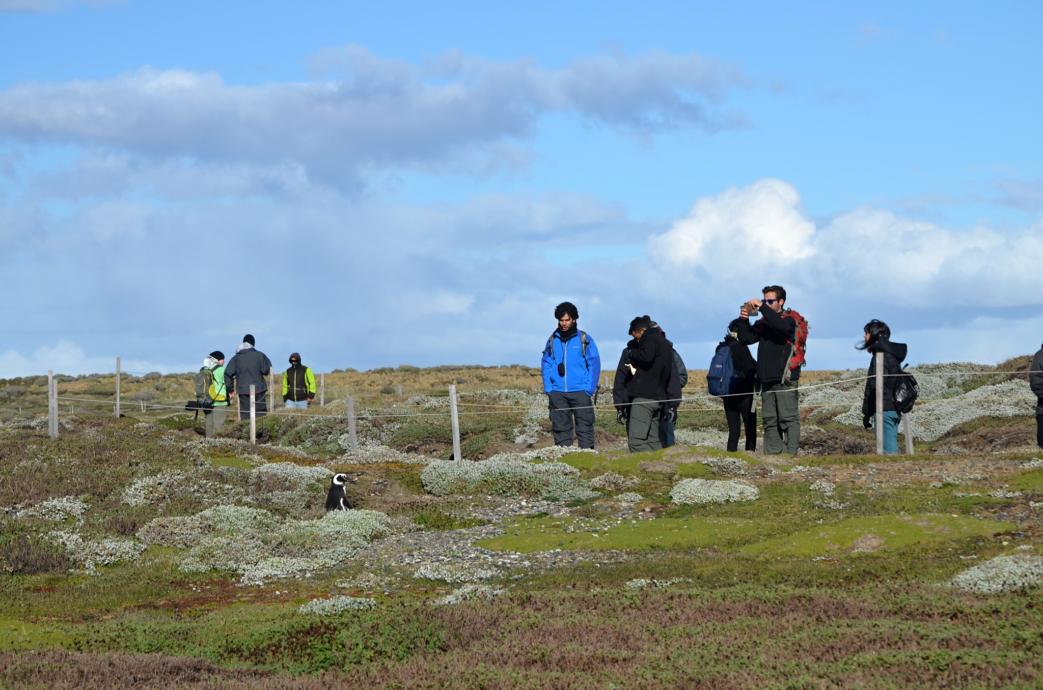 Turisté obdivují malého osamoceného tučňáka