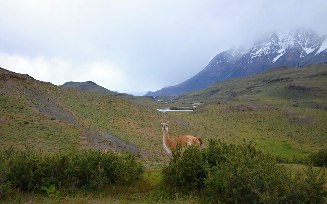 Přejezd do Puerto Natales a pak do NP Torres del Paine
