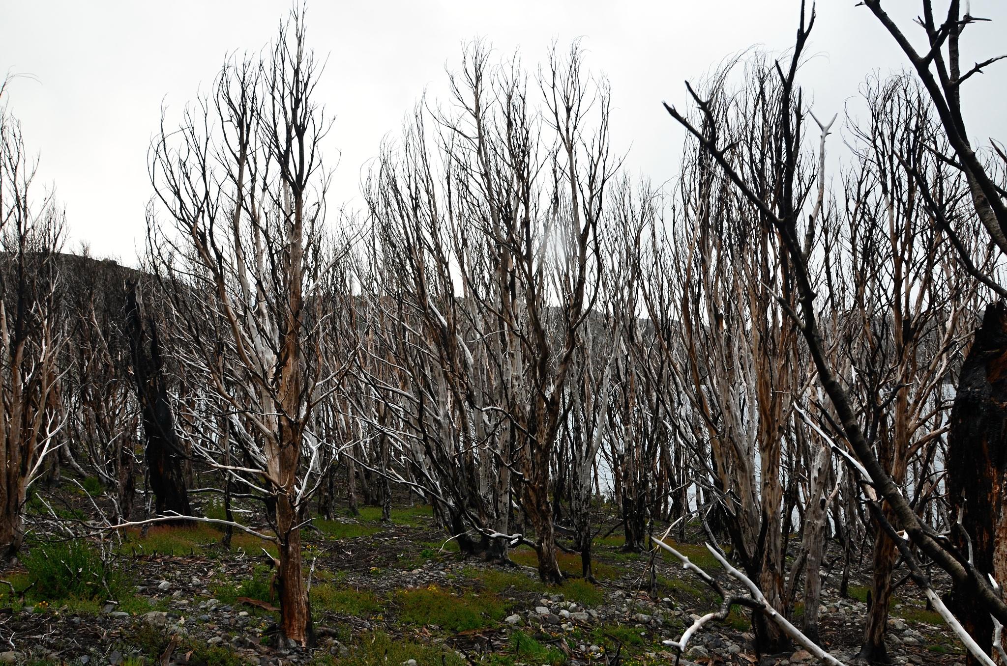 ...a kousek dál mrtvý, spálený les