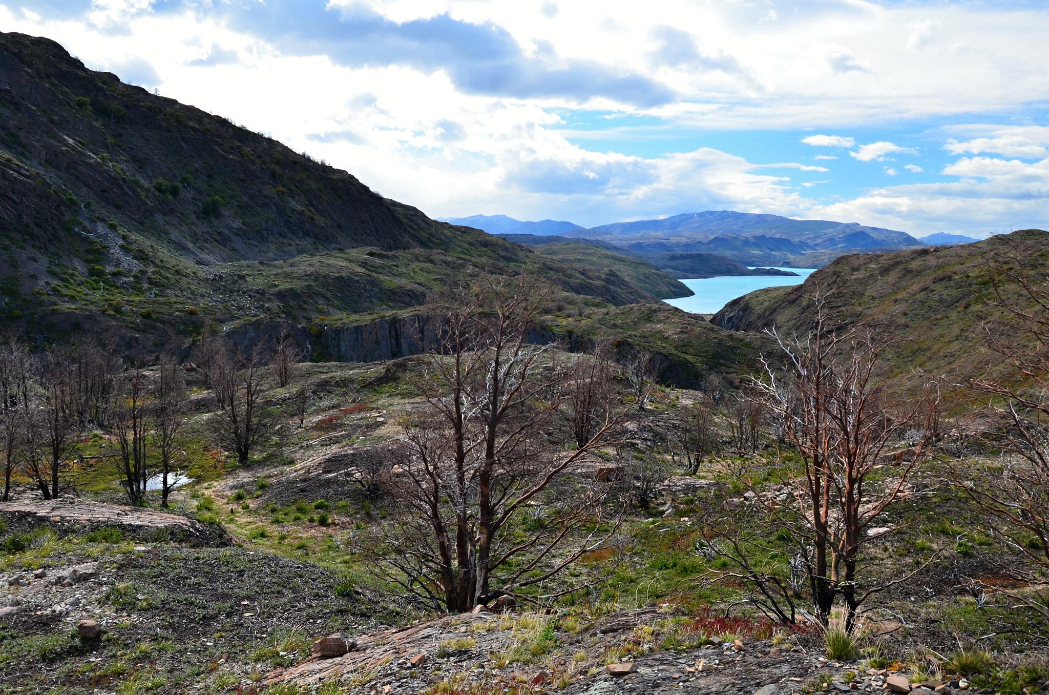 Údolí vedoucí k jezeru Pehoé