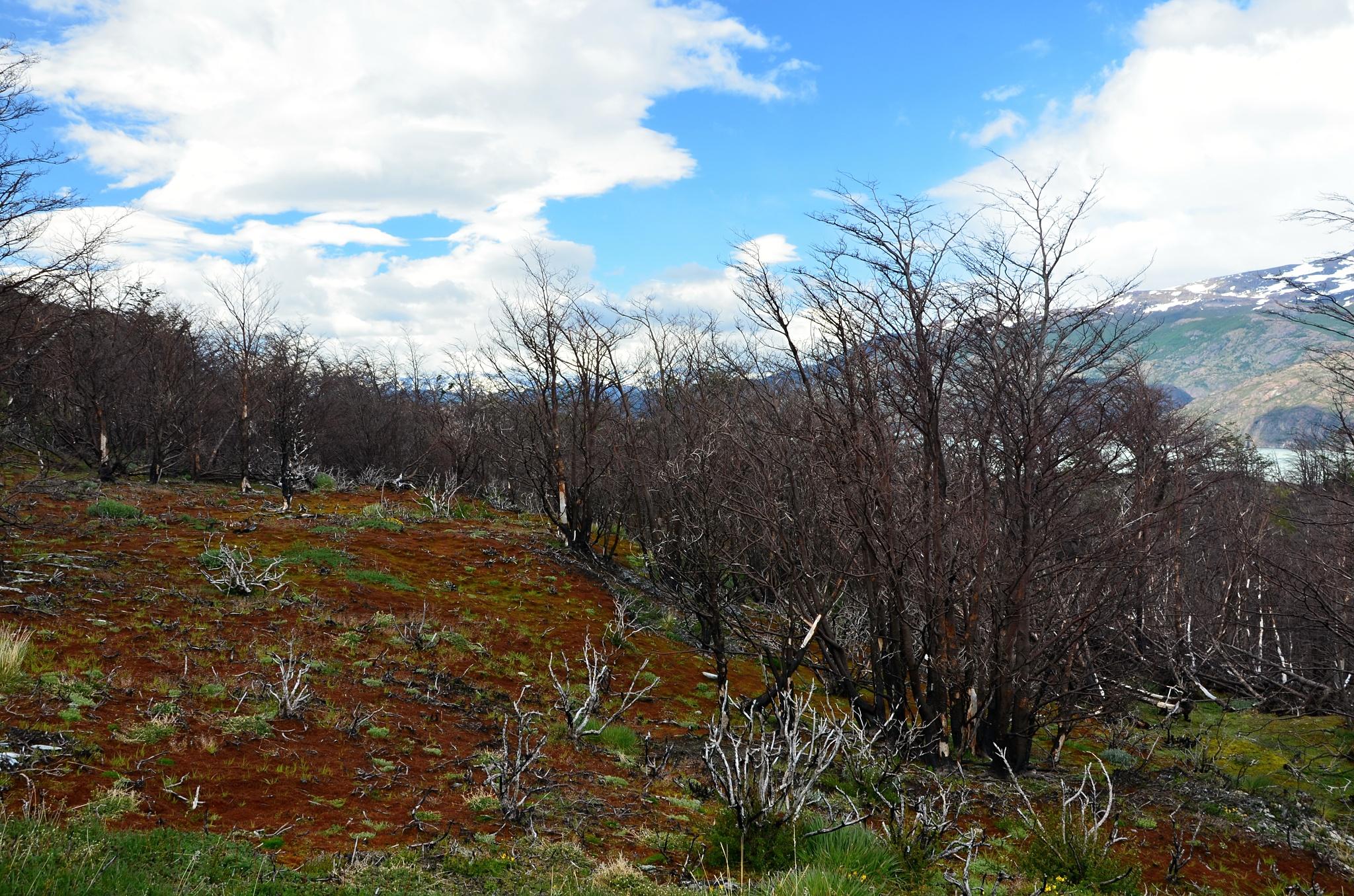 Oranžová tráva a černý les