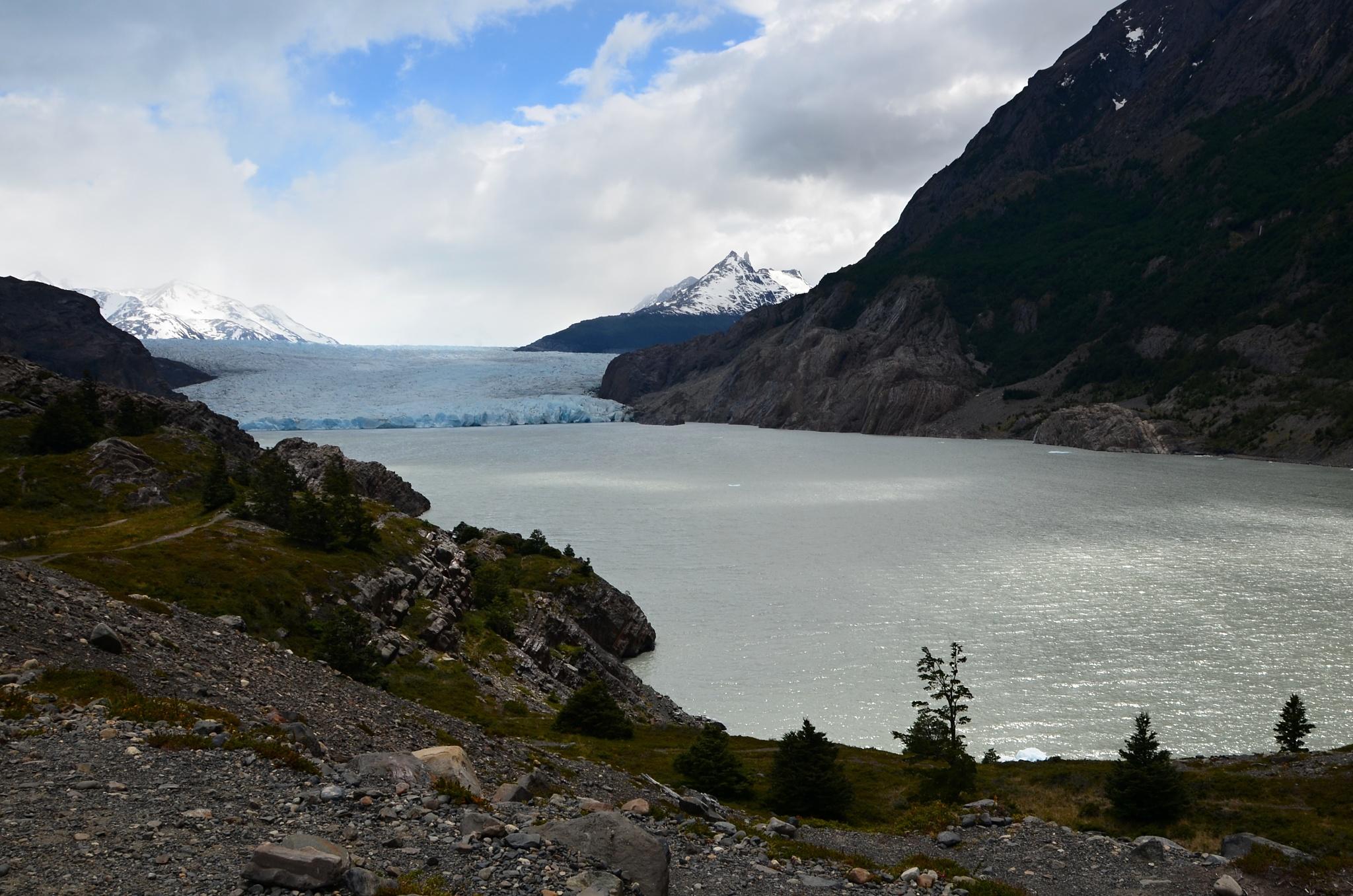 Zátoka na jezeře Grey a ledovec v povzdálí