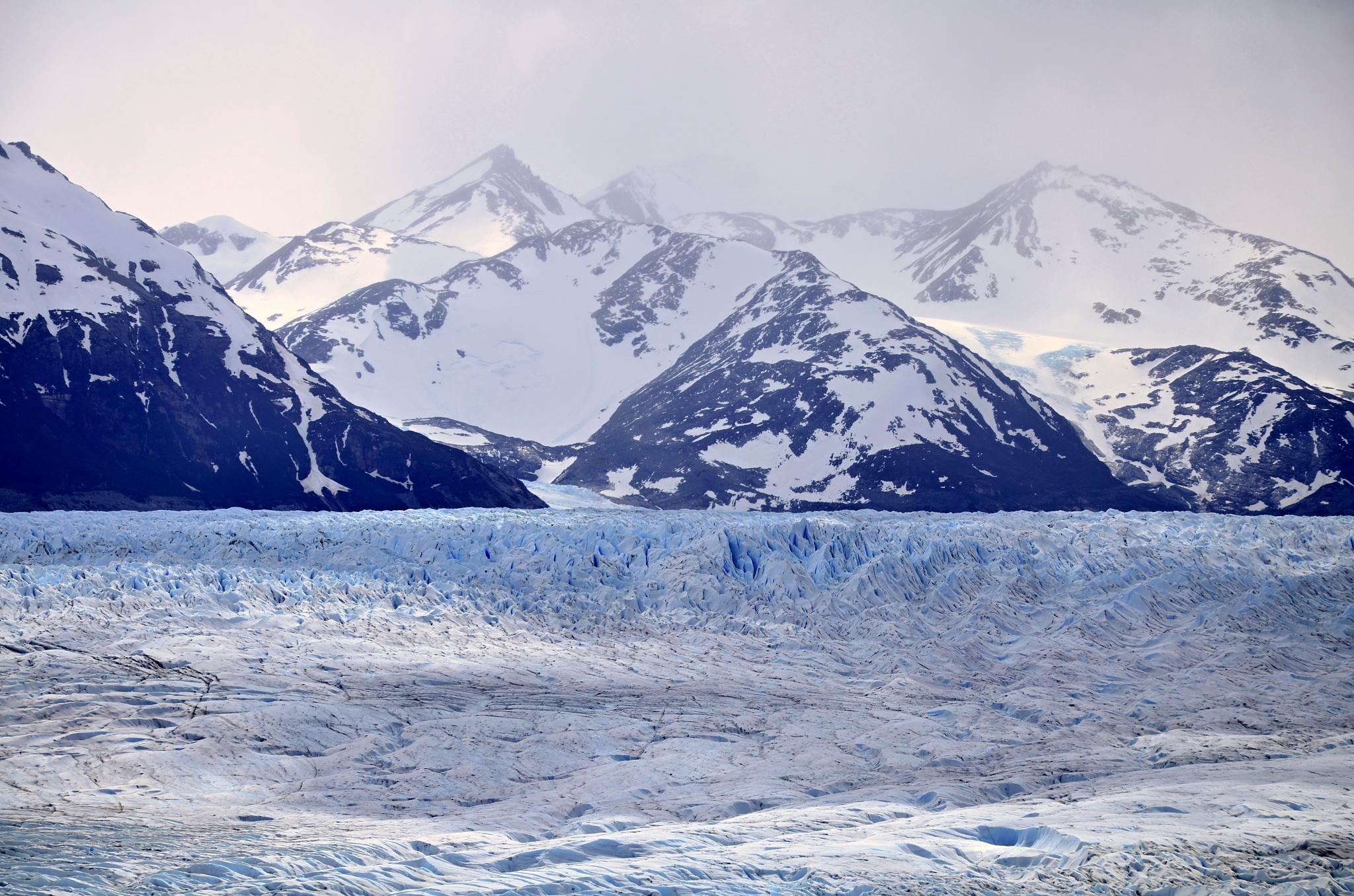 Ledovec Grey
