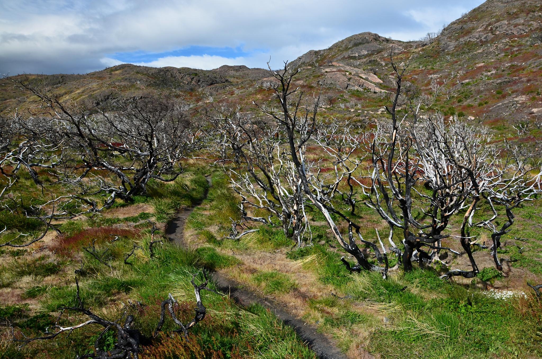 Další spálené keře a nízké stromy