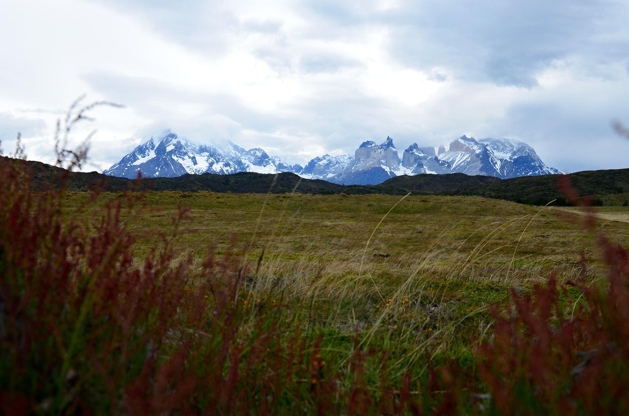 Pampa a v pozadí Paine Grande a Cuernos del Paine