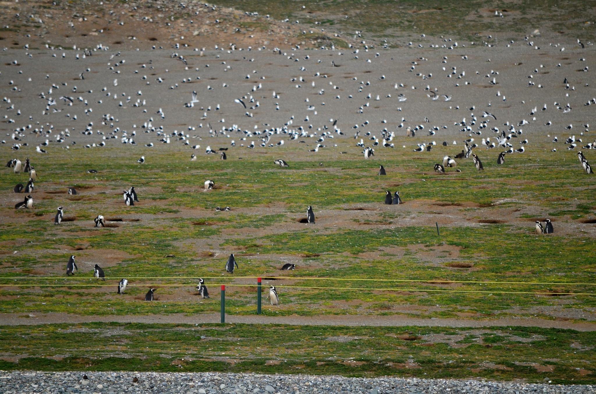 To je tučňáků a albatrosů a dalších opeřenců!