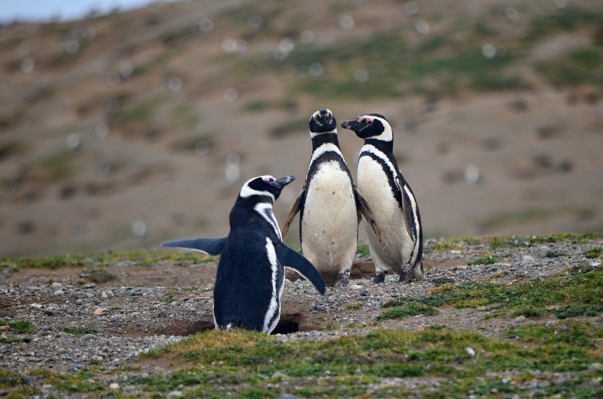 Trojice tučňáků