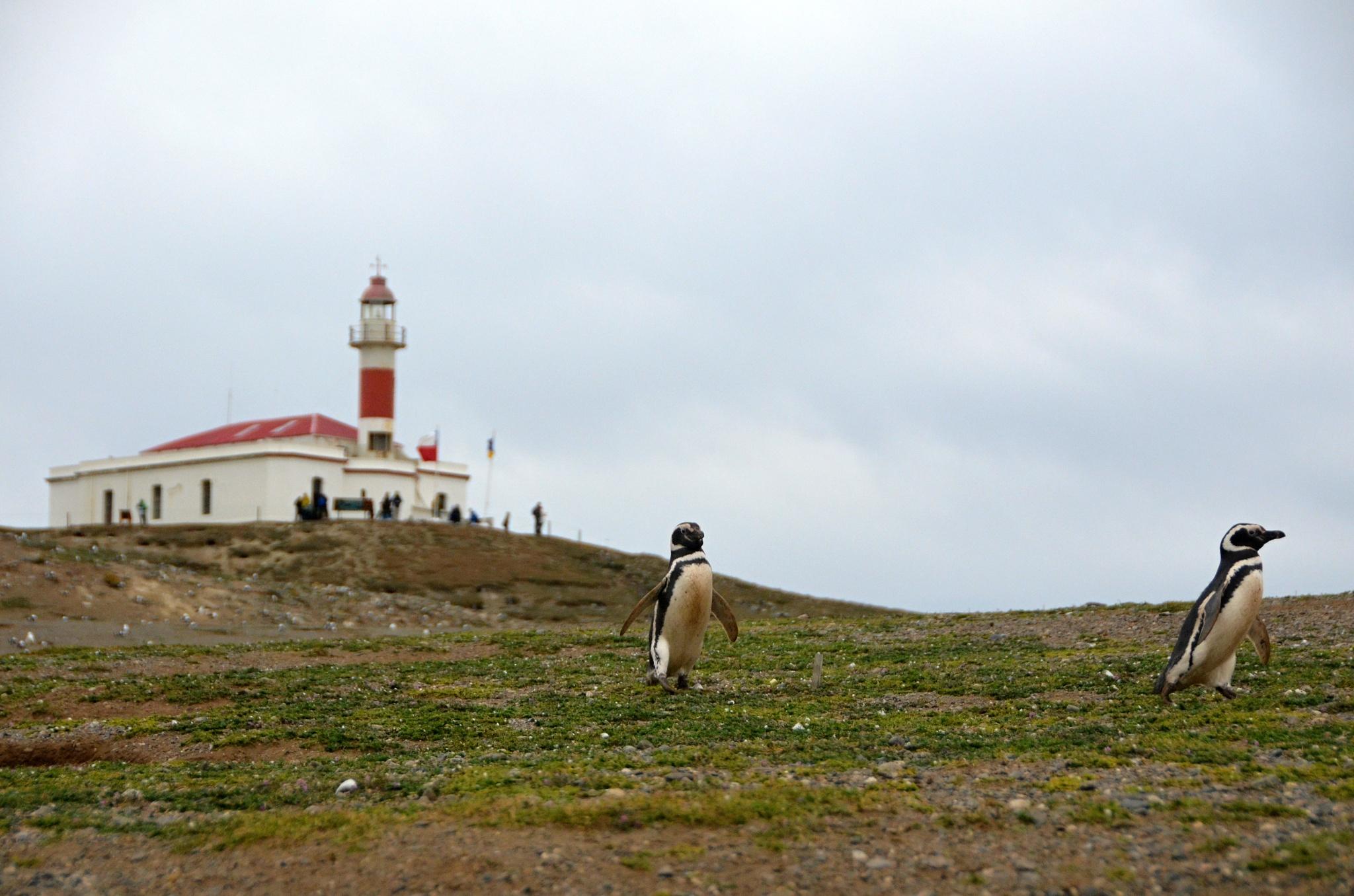 Tučňáci před majákem