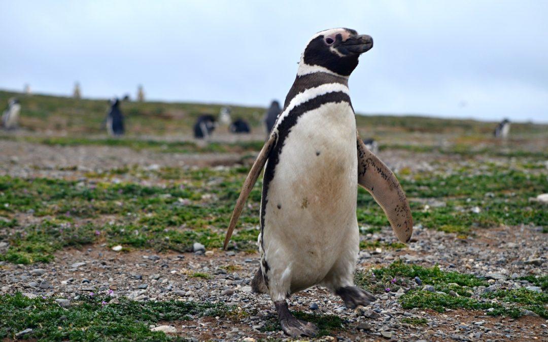 Plavba za tučňáky na ostrov Magdalena