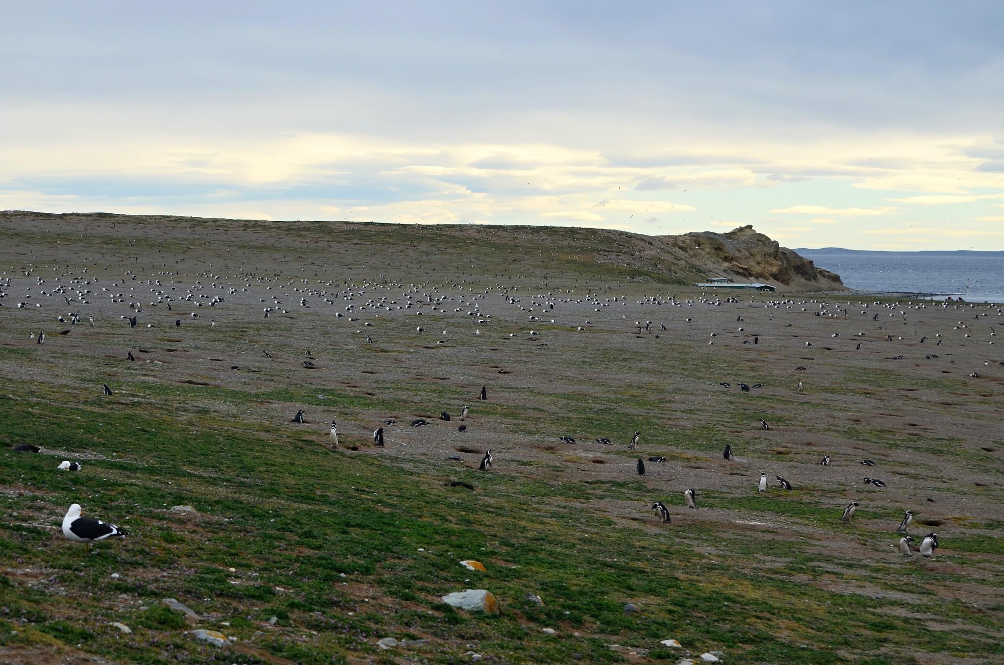 Všude samý tučňáka a albatros