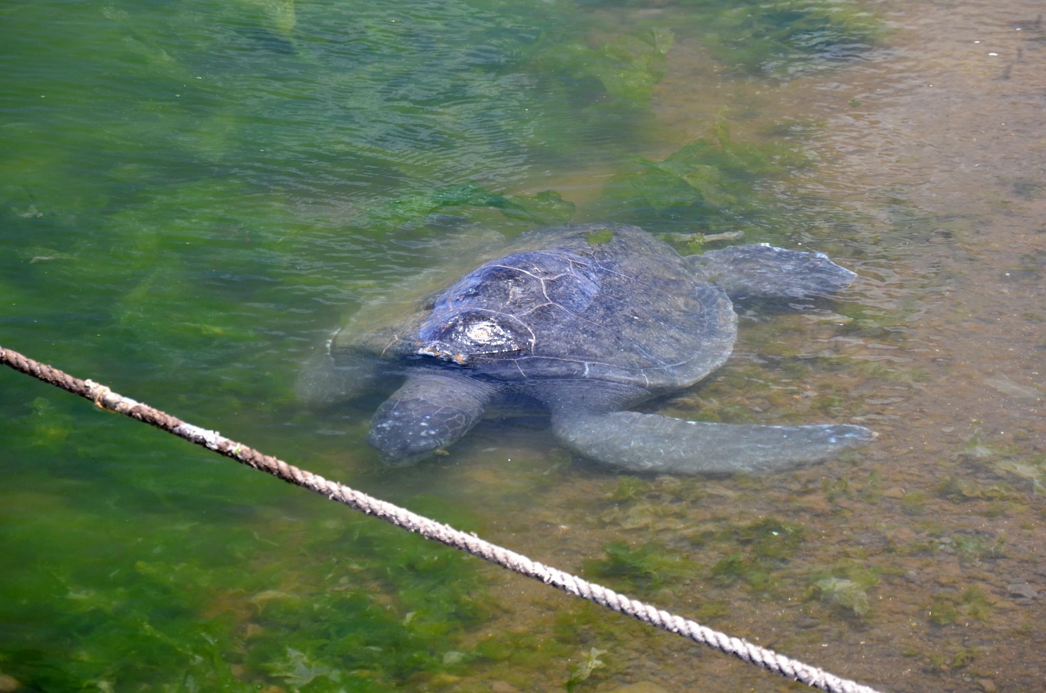 Trochu ochočená želvička