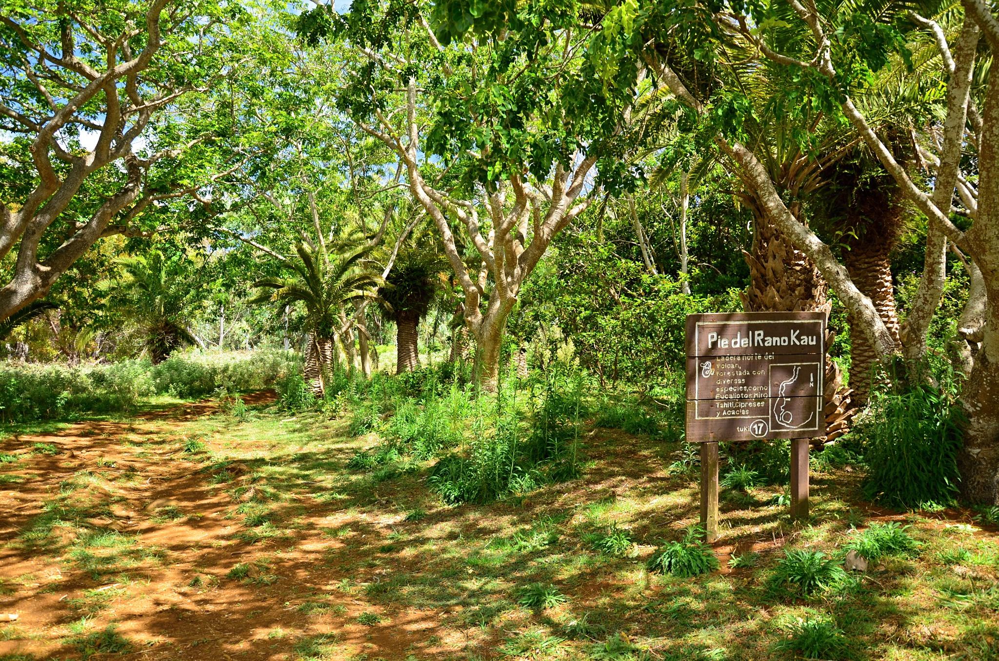 Nádherný lesík složený ze blahovičníků, cypřišů a akácií