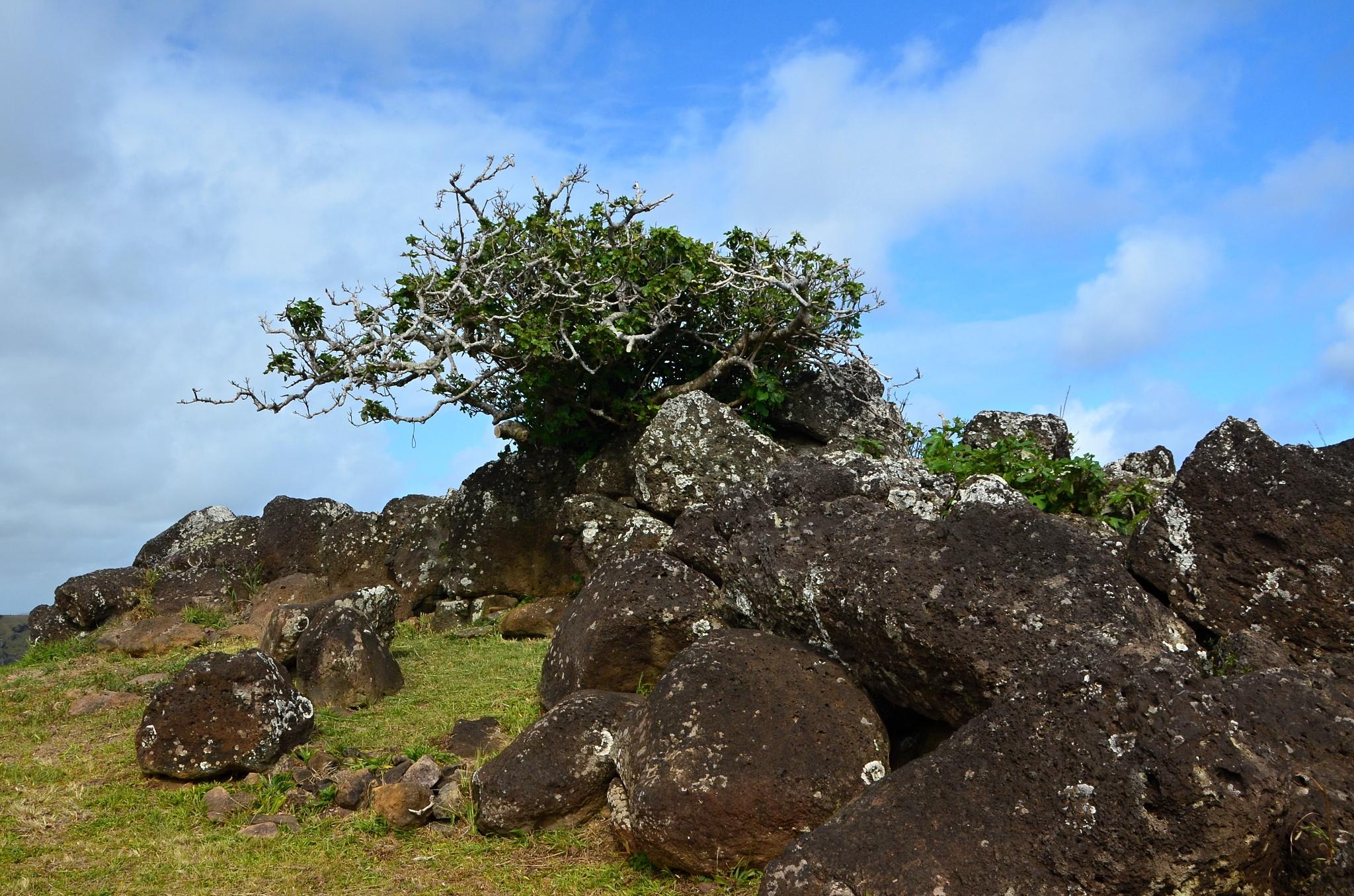 Na sopce roste dokonce i malý stromek