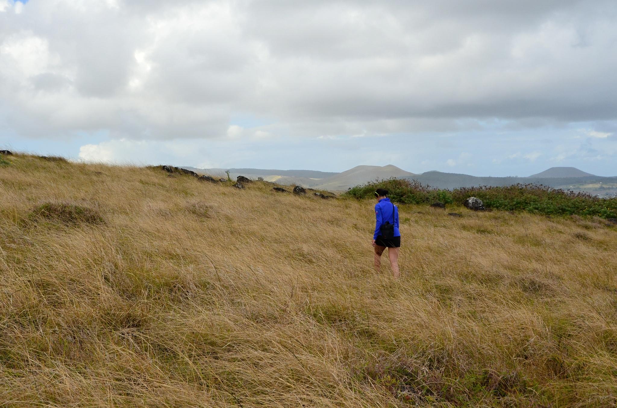 Cesta vysokou travou je... nezáživná a přitom obtížná