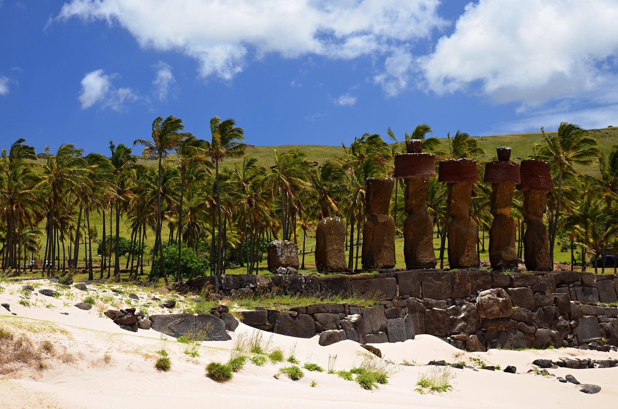 Moai se dívají na palmový háj