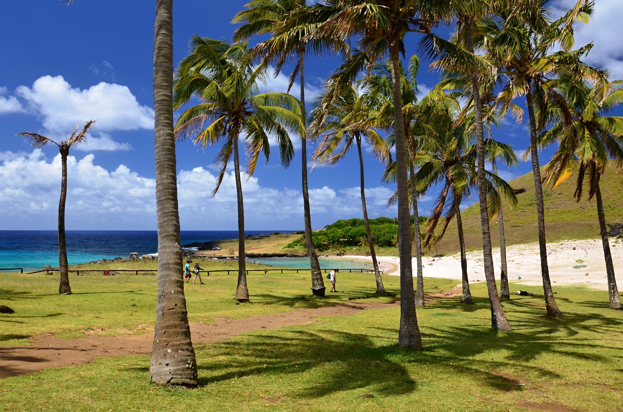 Palmový háj na pláži Anakena, kudy se občas přežene stádo divokých koní