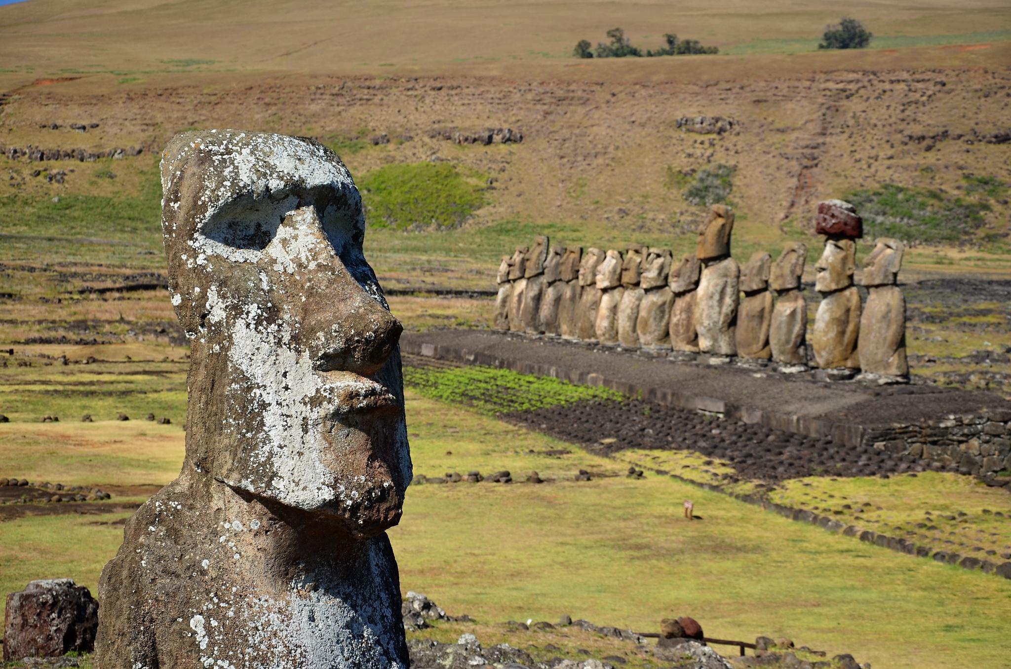 Samostatná Moai a za ní 15 dalších soch