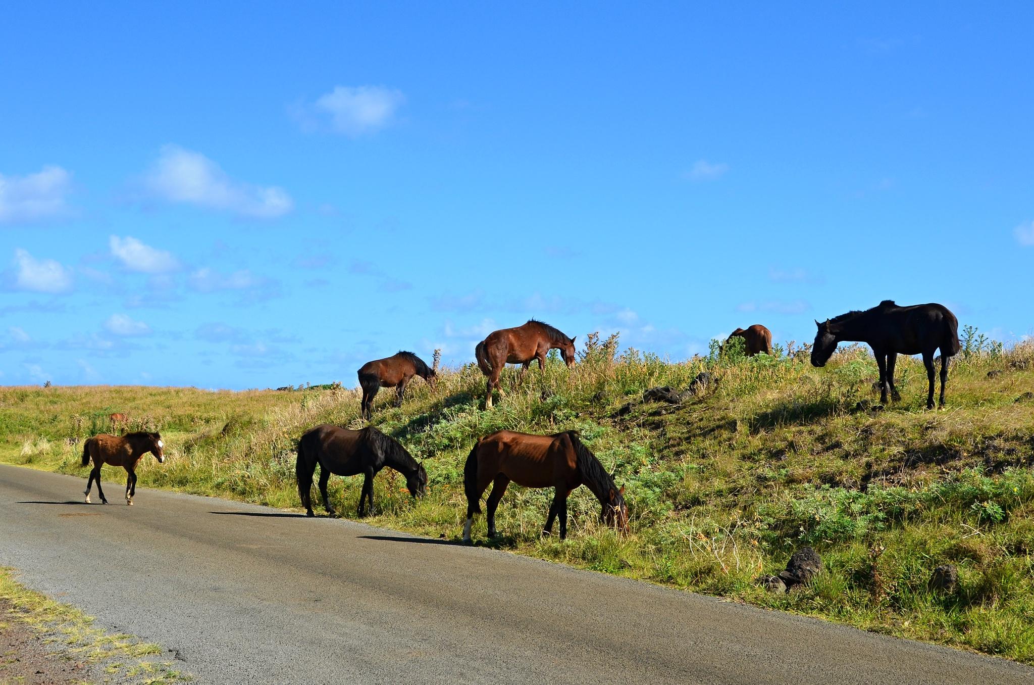 A další koně, celé stádo...
