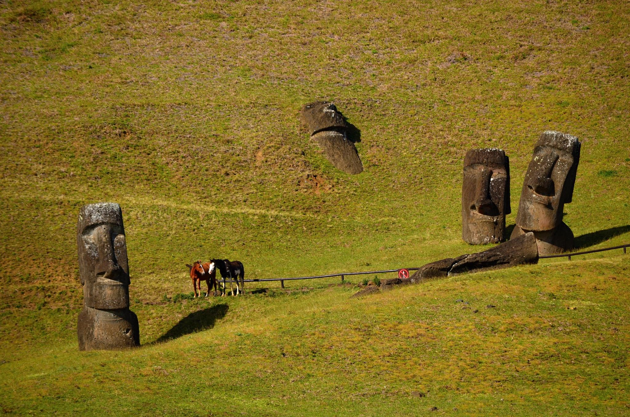 Moai na úpatí vulkánu Rano Raraku a mezi nimi divocí koně