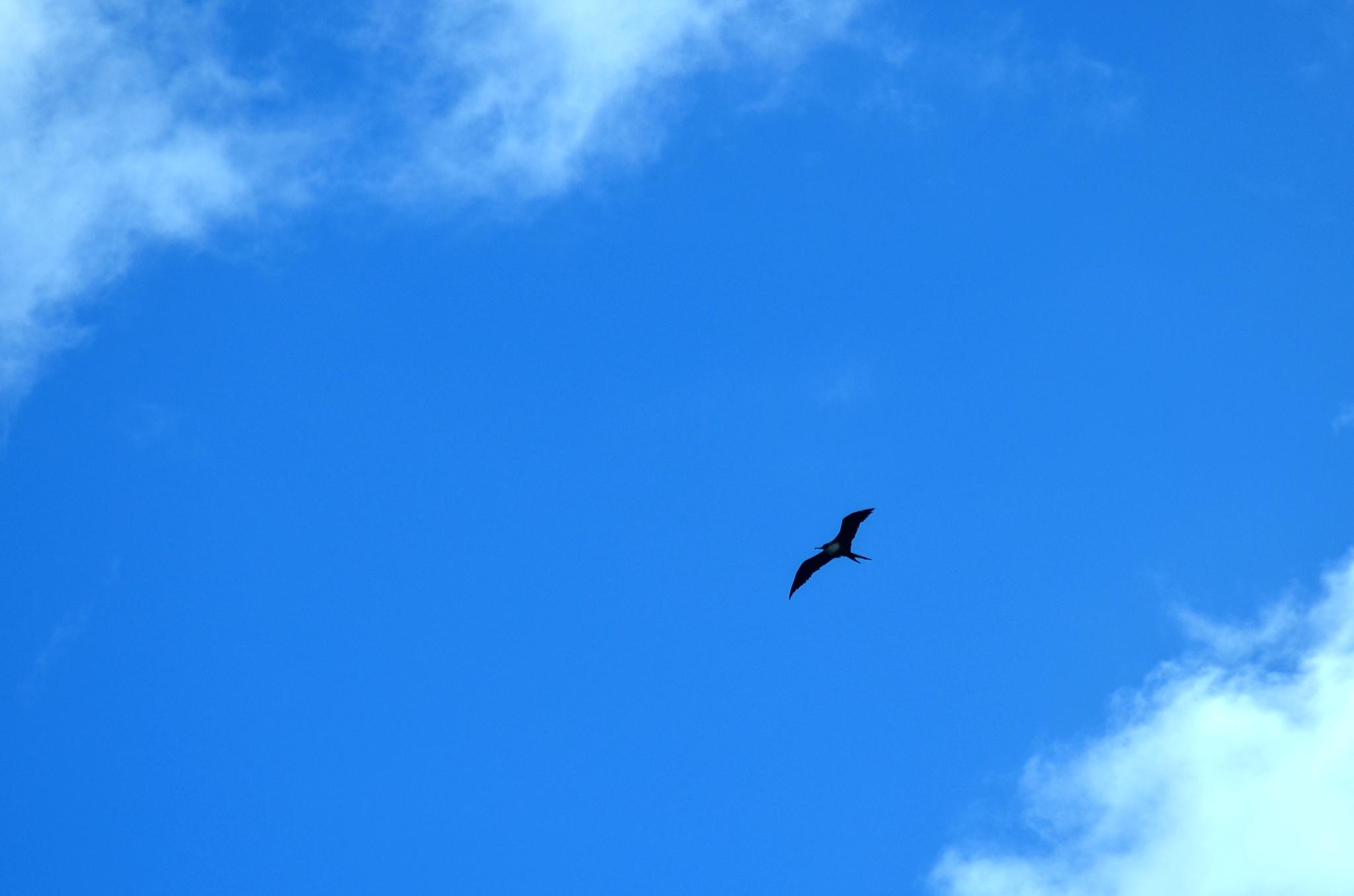 Neznámý obrovský plachtící pták