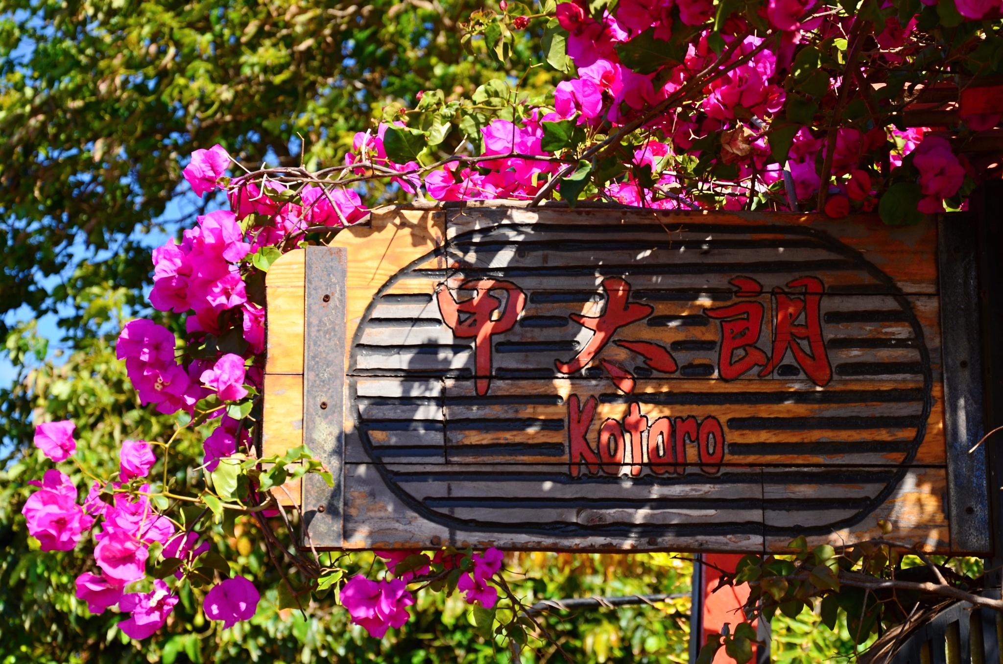 Restaurace Kotaro v denním slunečném světle