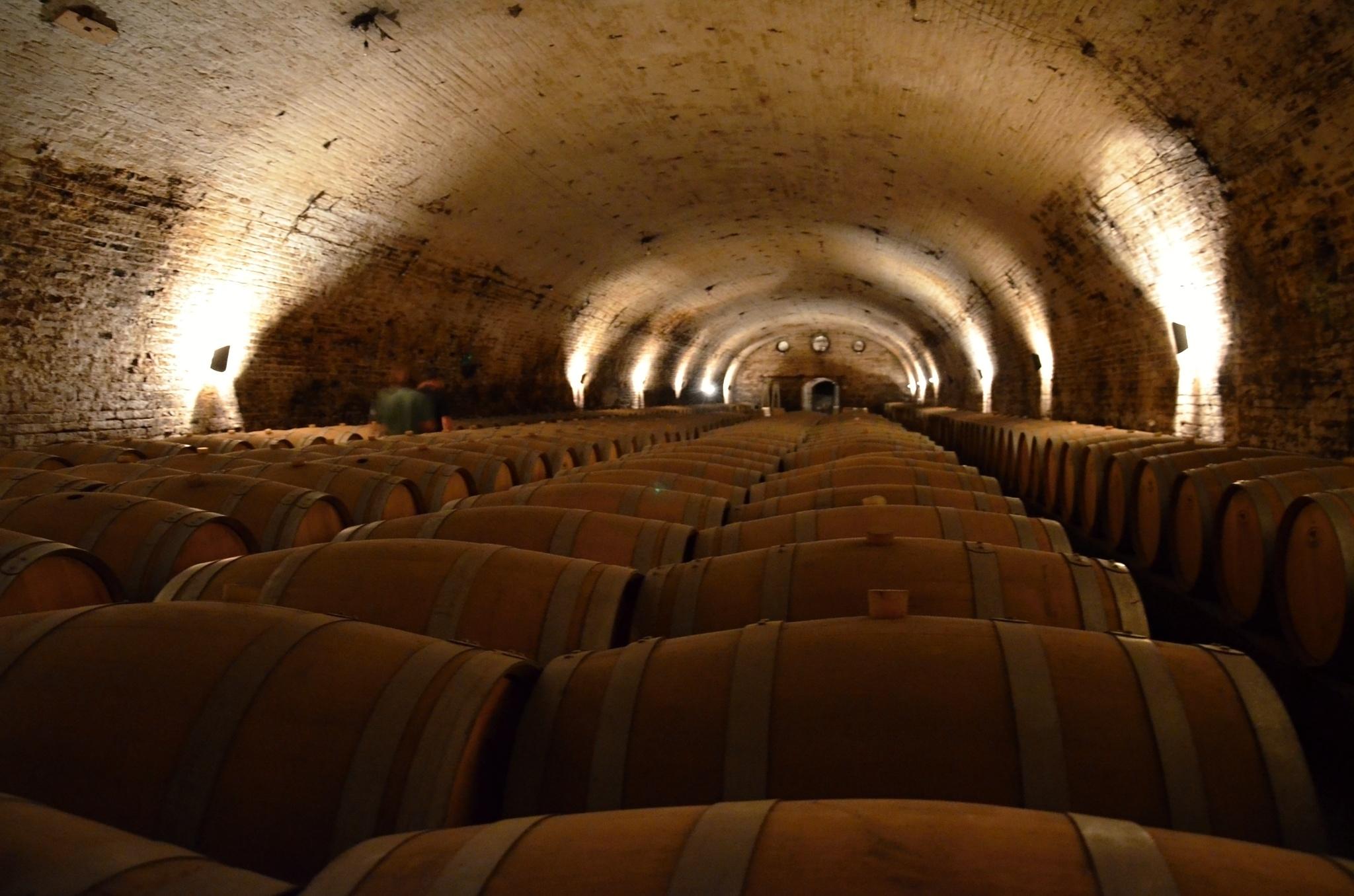 Sudy se zrajícím vínem