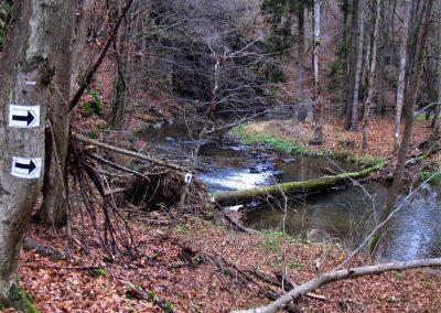 Kmen přes říčku (autor gone4run.blogspot.cz)