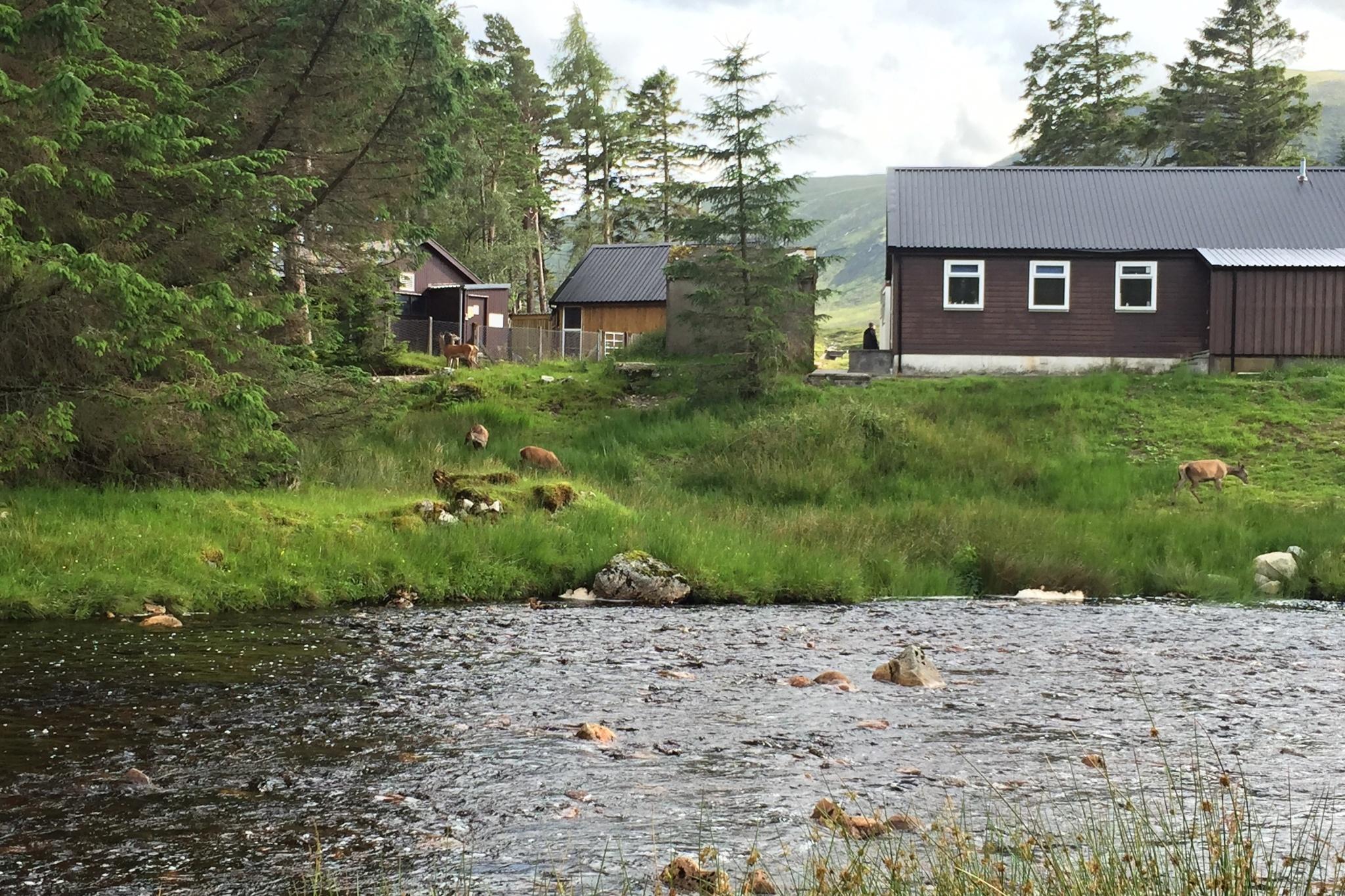 Stádečko laní přímo v táboře